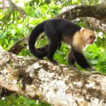 Parrita Costa Rica Monkeys