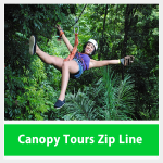 Zip Line Tour Canopy Tree
