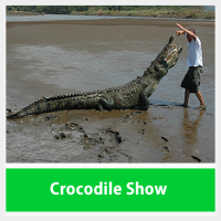 Crocodile Show Tours Costa Rica