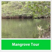 Mangrove Tour Costa Rica Jaco Beach
